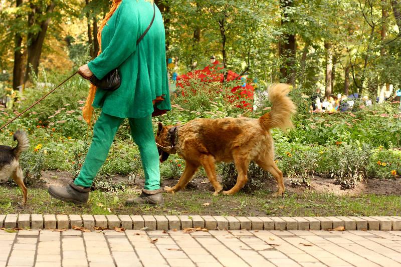 Acompanyament per passejar / cuidar gossos